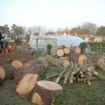 Démontage des arbres 4