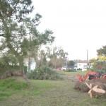 Démontage des arbres 3