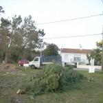 Démontage des arbres 2