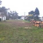 Démontage des arbres 6