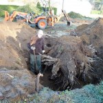 Démontage des arbres 5